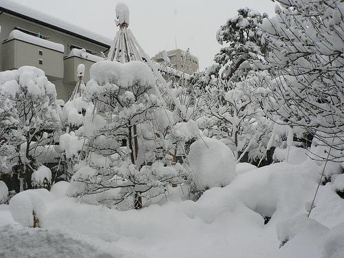 A Heavy-Snowed Morning